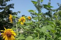 Nasz Ogród 🌻🥒🍅🍓🌼🌿