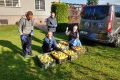Zbiór jabłek Stolarzowice 2019